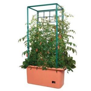 Tomato Container image
