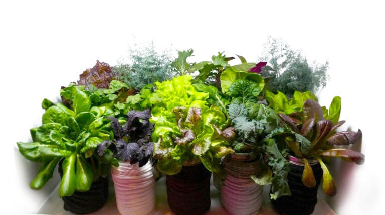 Photo of various leafy greens
