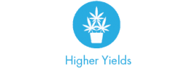 higher-yields